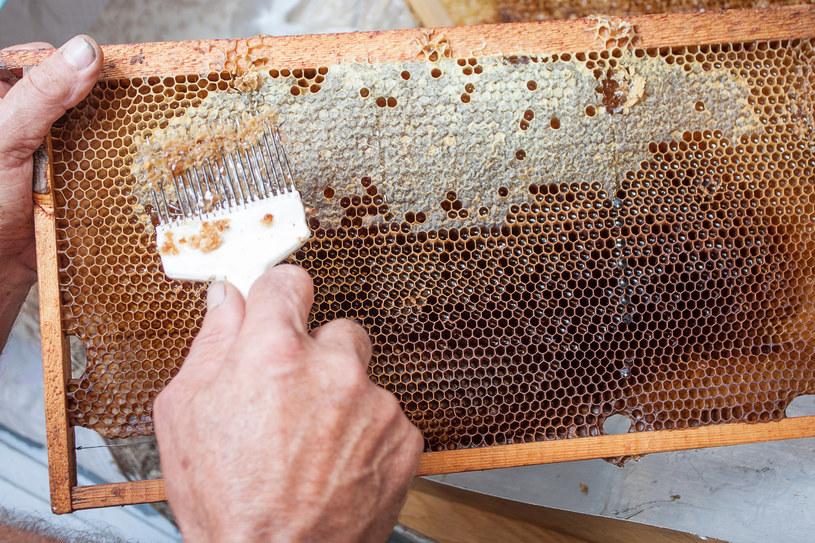 W tym roku zabraknie miodu spadziowego? Pszczelarze alarmują (zdj. ilustracyjne) /123RF/PICSEL