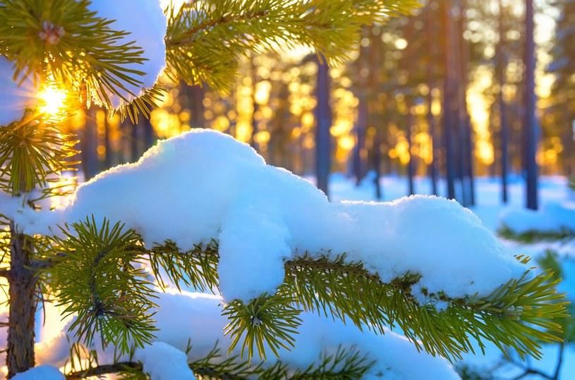 W tym tygodniu na wschodzie Polski spodziewane są opady śniegu /123RF/PICSEL