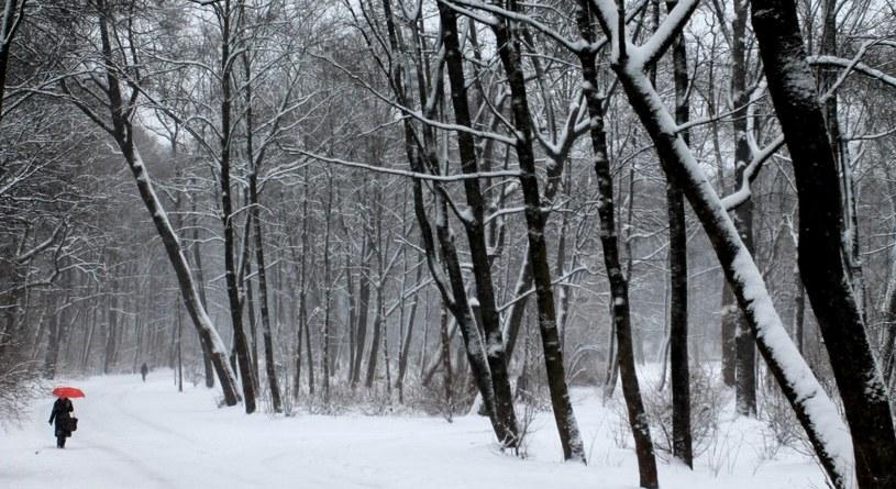 W tym tygodniu należy się spodziewać zarówno opadów deszczu, jak i śniegu /123RF/PICSEL
