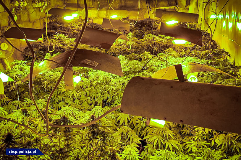 W ukrytym pomieszczeniu rosło 211 krzewów konopnych /Policja