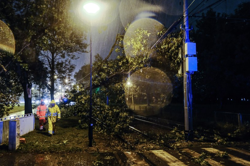 W Warszawie w wyniku burzy drzewo spadło na tory tramwajowe. /Mateusz Marek /PAP