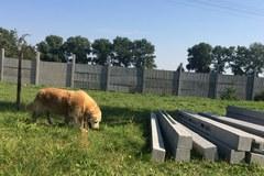 W Wielkopolsce powstaje dom emeryta... dla psów i koni, które pracowały w policji i innych służbach