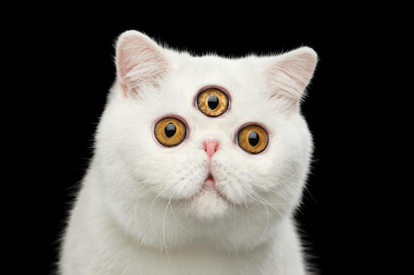 """W wielu kultura i wierzeniach """"trzecie oko"""" oznaczało zdolność widzenia rzeczy, które nie ujrzą inni - czy zwierzęta mają takie """"trzecie oko""""? /123RF/PICSEL"""