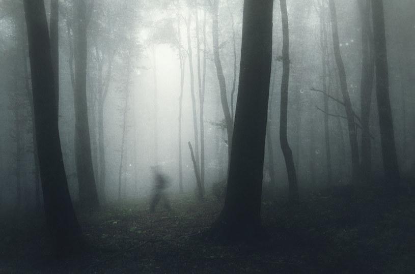 W witkowickim lesie od wieków dzieją się niewytłumaczalne rzeczy... /123RF/PICSEL