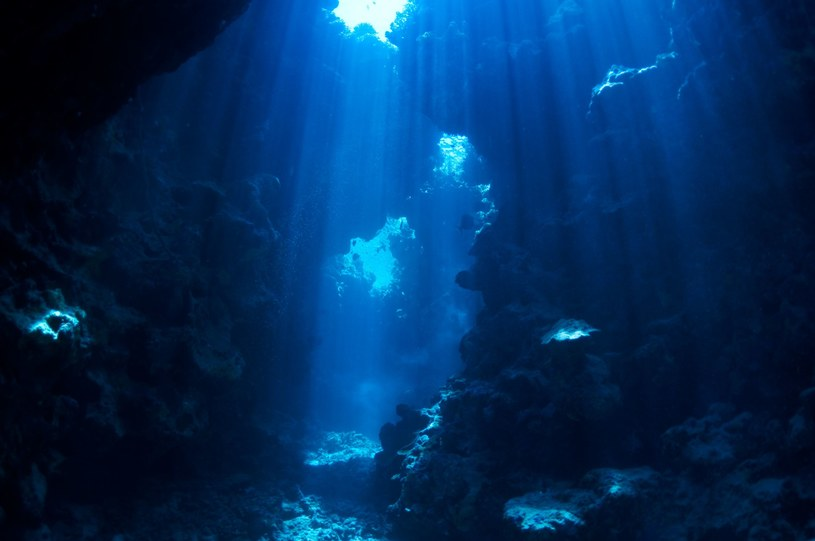 W wodach Wiru Południowopacyficznego nic nie ma? Niezupełnie /123RF/PICSEL