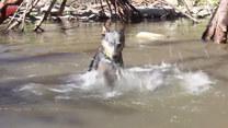 W wodzie czuje się jak ryba! Zabawny psiak