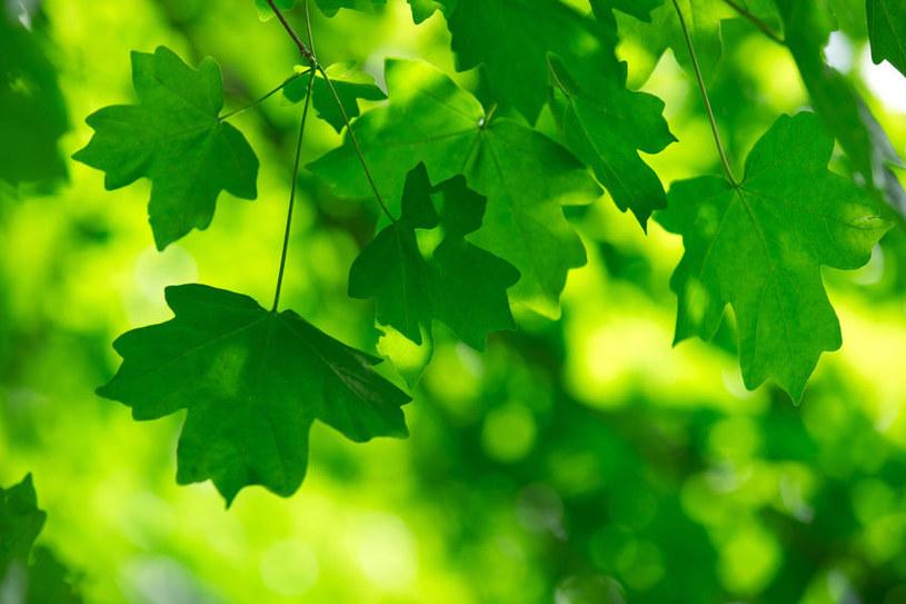 W XX w. rośliny zwiększyły wchłanianie dwutlenku węgla z atmosfery /123RF/PICSEL