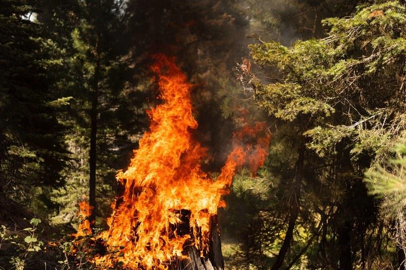 W zachodnich stanach USA płonie w tej chwili ponad 80 potężnych pożarów. /NORTH AMERICA Mathieu Lewis-Rolland /AFP