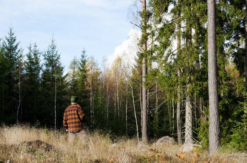 W żadnym kraju UE nie znajdziesz tylu ofert dla pracowników leśnych co w Szwecji /123RF/PICSEL