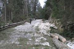 W Zakopanem i Tatrach wielkie sprzątanie po wichurach
