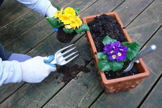 W zamian za posegregowane odpady będzie można otrzymać sadzonki oraz zastawy cebulek kwiatowych /© Bauer