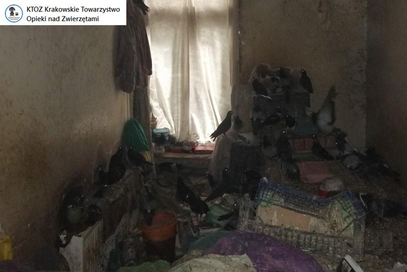 W zupełnie zdemolowanym mieszkaniu nieznana osoba przetrzymywała żywe sroki i gołębie /facebook.com