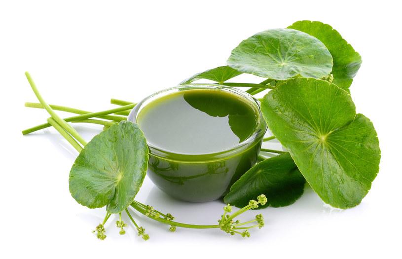 Wąkrota azjatycka wykorzystywana jest w medycynie naturalnej i w kosmetykach /123RF/PICSEL