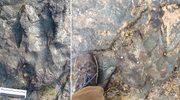 Wandale zniszczyli młotkiem liczący 115 mln lat odcisk stopy dinozaura