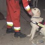 Wandale zniszczyli poligon do tresury psów ratunkowych. Odbudowa może potrwać pół roku