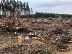 Warmińsko-mazurskie: Wycięli 269 drzew. Parafia ukarana karą