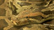 Warszawa: Nad Wisłą może przebywać niebezpieczny wąż