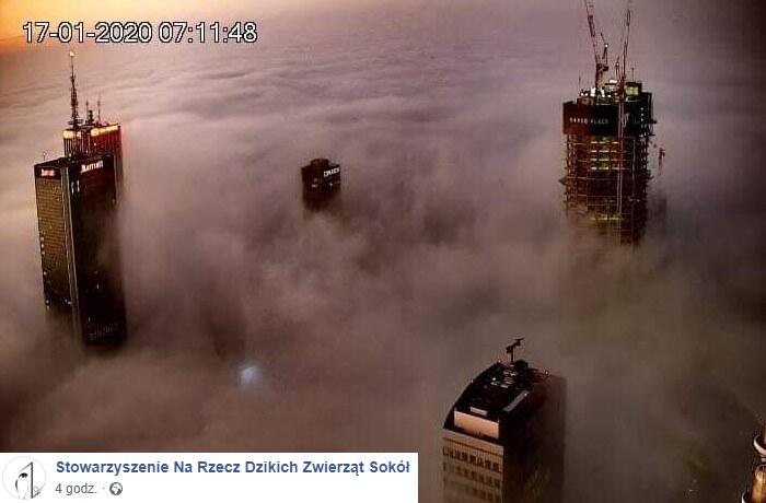 Warszawa we mgle /Stowarzyszenie Na Rzecz Dzikich Zwierząt Sokół/Facebook /