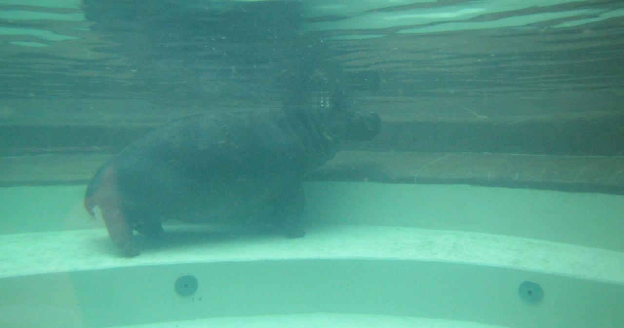 Warszawskie Zoo szykuje na weekend nowe atrakcje