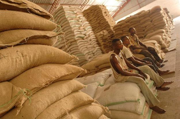 Warto docenić pracę tych, dzięki którym możemy się codziennie delektować filiżanką dobrej kawy /AFP