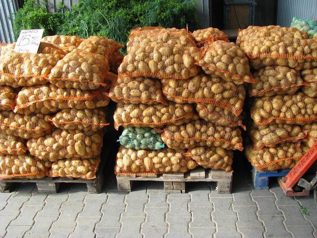Warto kupować u samych rolników /INTERIA.PL