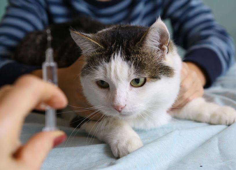 Warto sprawdzać, czy zwierzęta domowe nie mają pasożytów /123RF/PICSEL