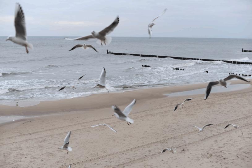 Warto wybrać sie nad Bałtyk zimą /123RF/PICSEL