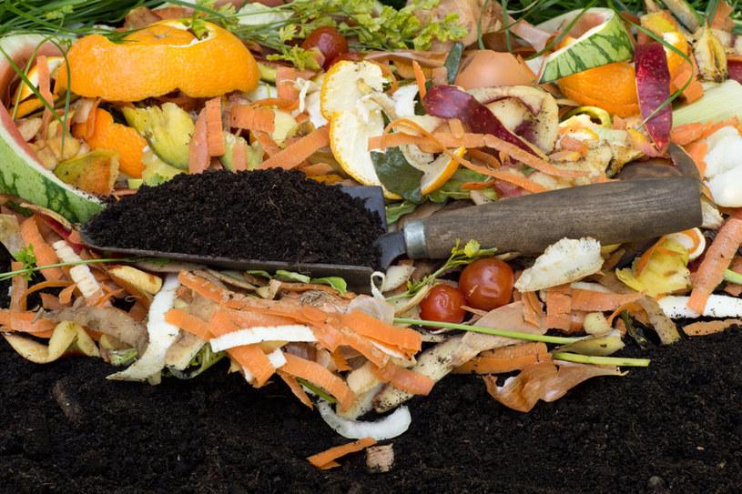 Warto zastosować specjalną grzybnię do kompostu /123RF/PICSEL