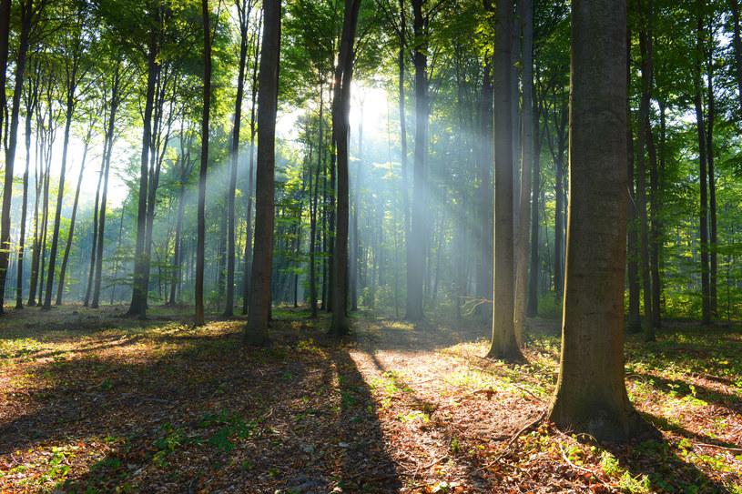 Wartość światowych zasobów leśnych wyceniana jest na 50-150 bln dolarów. /123RF/PICSEL