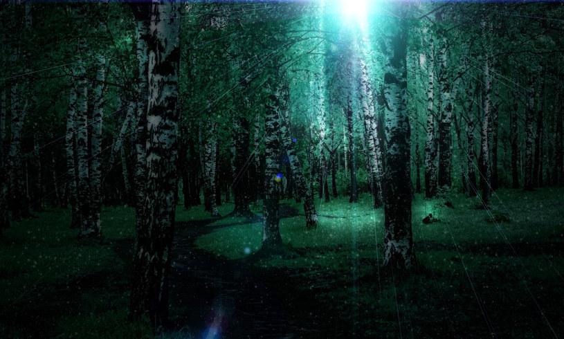 Wartownicy dostrzegli w lesie dziwne światło... /123RF/PICSEL