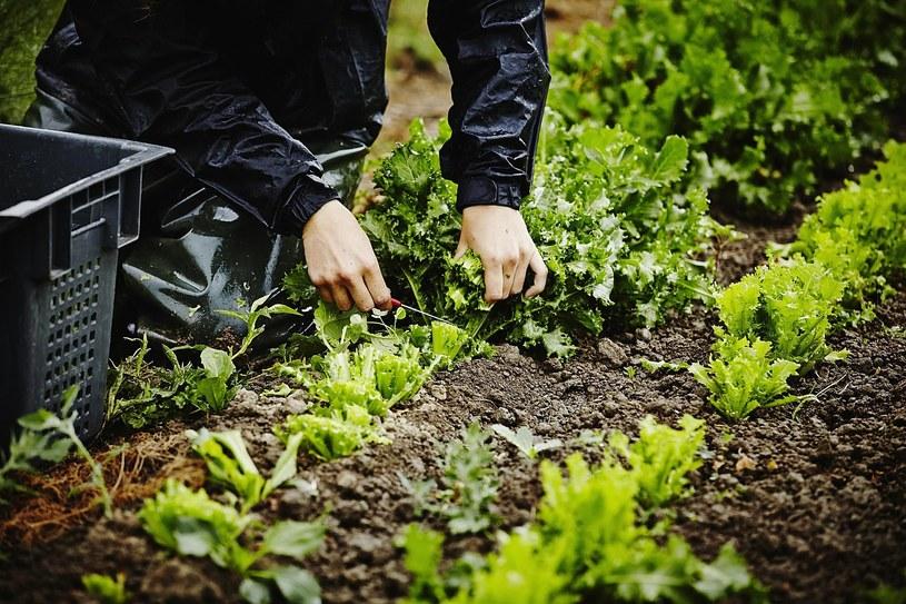 warzywa organiczne /© Photogenica