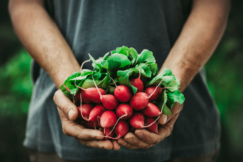 Warzywa warto jeść z dodatkiem tłuszczu, np. oliwy z oliwek, oleju rzepakowego, lnianego. To dlatego, że w tłuszczach rozpuszcza się wiele witamin, jak A, D, E i K, dzięki czemu zwiększa się ich przyswajalność /123RF/PICSEL