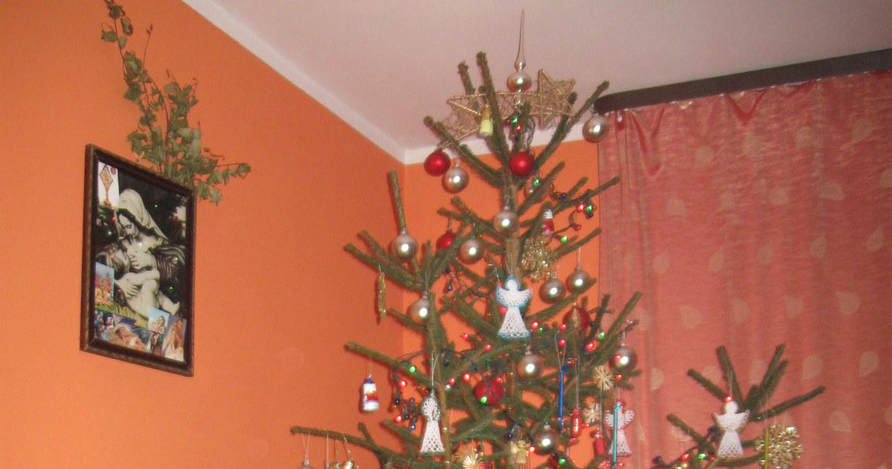 Wasze świąteczne drzewka - zobacz zdjęcia