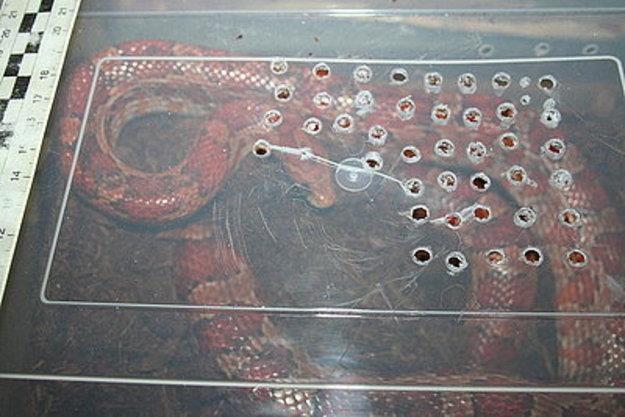 Wąż był dobrze zabezpieczony w terrarium /RMF