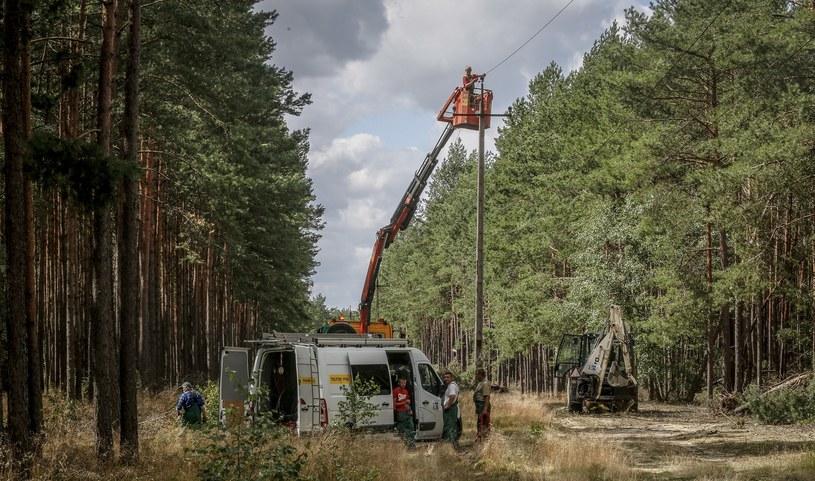 Wbrew pozorom, w lesie czasem też udaje się znaleźć prąd... /Karolina Misztal /Reporter