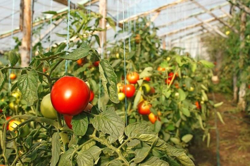Wczesną wiosną w sklepach dostępne są warzywa ze szklarni /123RF/PICSEL