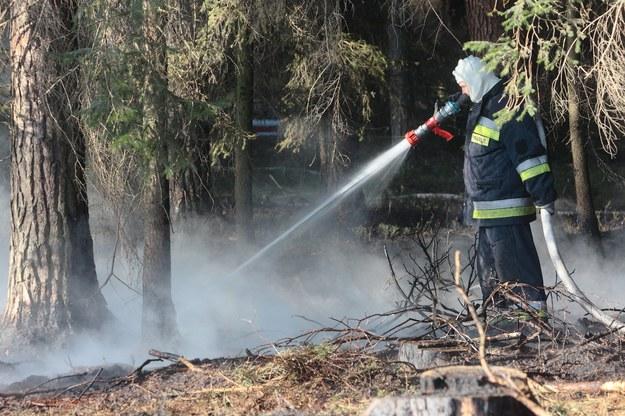 Wczoraj strażacy gasili ponad 620 pożarów lasów i upraw (zdj. ilustracyjne) / Tomasz Wojtasik    /PAP