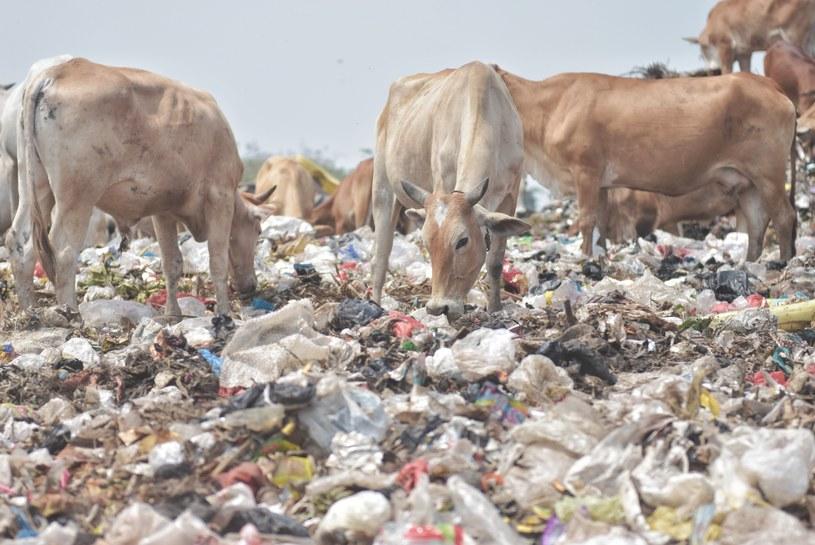 We Włoszech co roku wyrzuca się do kosza żywność, którą można byłoby nakarmić 44 milionów ludzi /Getty Images