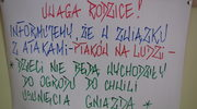We Wrocławiu wrona terroryzowała przedszkolaków