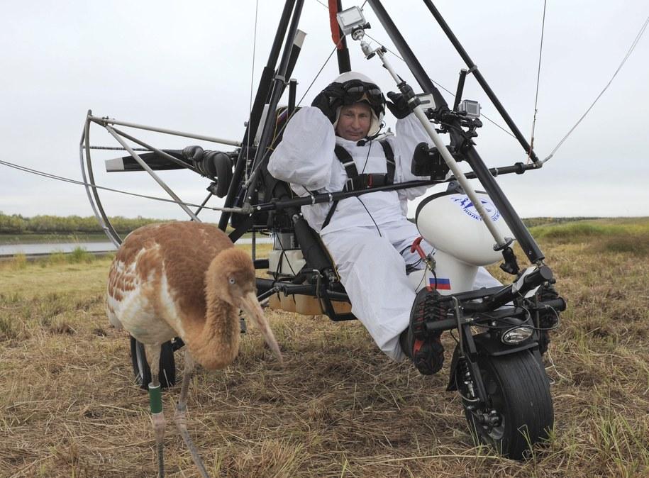 We wrześniu 2012 roku rosyjski prezydent wzbił się w powietrze na motolotni na Półwyspie Jamalskim, by towarzyszyć wychowanym w niewoli młodym żurawiom białym nazywanym też żurawiami syberyjskimi; jego zadaniem było wskazywanie młodym ptakom kierunku migracji. / ALEXEY DRUGINYN / RIA NOVOSTI / KREMLIN POOL /PAP/EPA