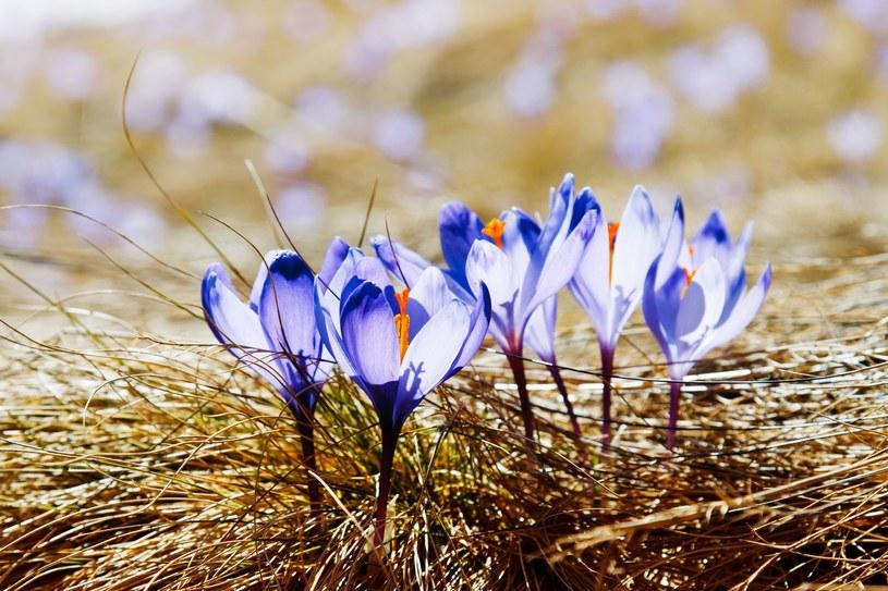 We wtorek pogoda przypomni nam, że wiosna się zbliża. Później nastąpi zmiana pogody /123RF/PICSEL