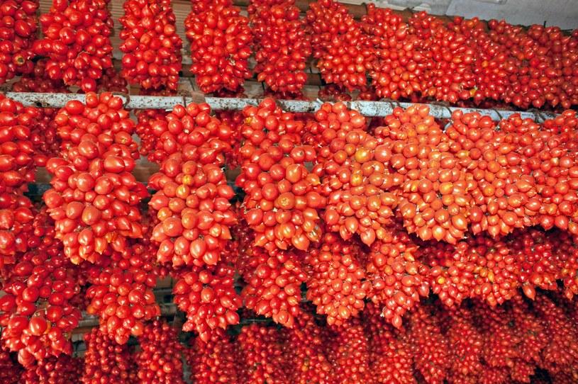 Według Bottury do spaghetti z pomidorami nadaja się tylko te, które rosną u podnóży Wezuwiusza. Żadne inne nie mają tyle aromatu. /123RF/PICSEL