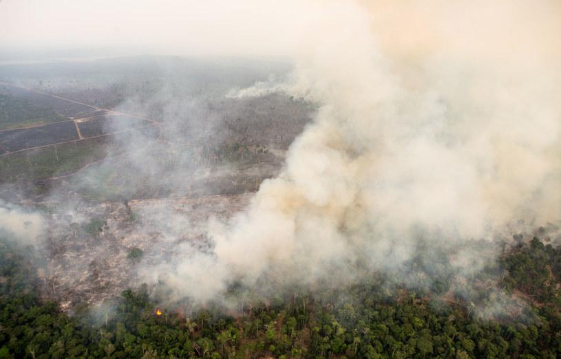 Według brazylijskich ekspertów, liczba pożarów lasów Amazonii wzrosła w tym roku o 84 procent /Dario Oliveira /Agencja FORUM