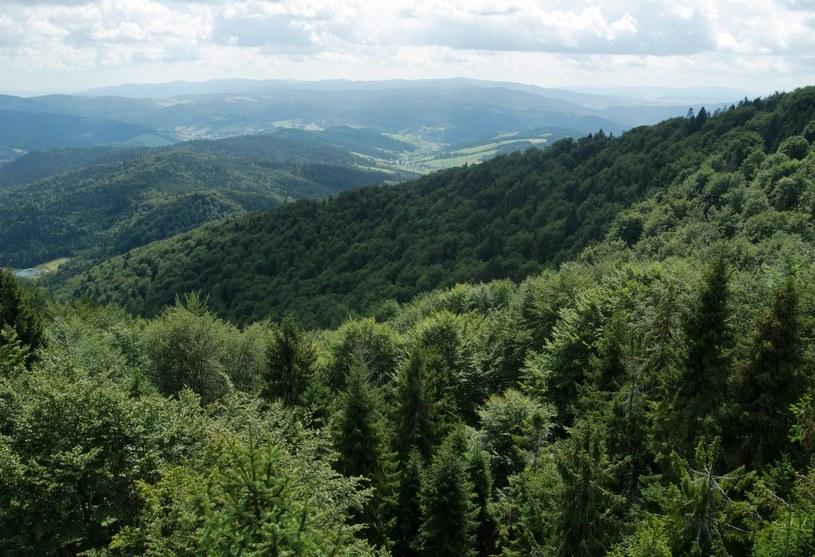 Według legendy w tych lasach ranny rycerz czekał na ratunek /LUKASZ SOLSKI /East News
