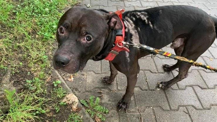 Według relacji właścicielki Diego od kilku tygodni był bity, psikany gazem pieprzowym i polewany Domestosem /Stowarzyszenie Ochrony Zwierząt Ekostraż /facebook.com