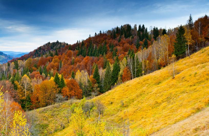 Weekend będzie pogodny. Warto więc skorzystać z uroków polskiej jesieni. /123RF/PICSEL