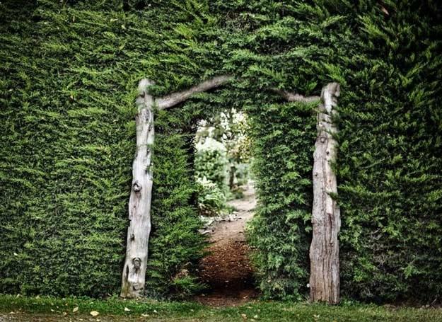 Wejście do tajemniczego ogrodu /123RF/PICSEL