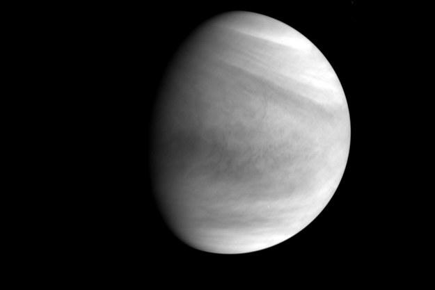 Wenus sfotografowana przez VCO Akatsuki w paśmie ultrafioletowym, 7 grudnia 2015 roku /materiały prasowe