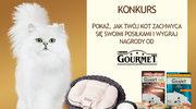 Weź udział w konkursie fotograficznym – kot koneser!