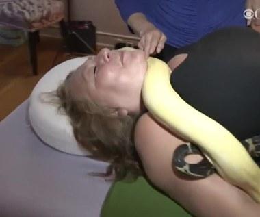 Węże pełzające po całym ciele. Osobliwa metoda masażu w USA